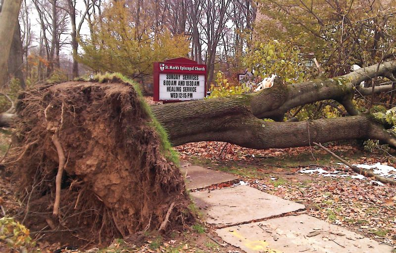 Storm-Sandy-Tree-StMarksChurch